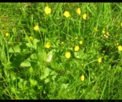 video:sommer 2009